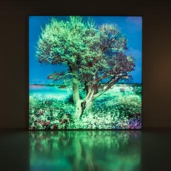 NATUREALLY  Stedelijk Museum Schiedam 2017